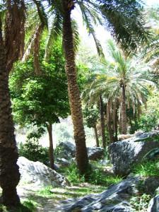Sultanat Oman Reise - grüne Landschaft